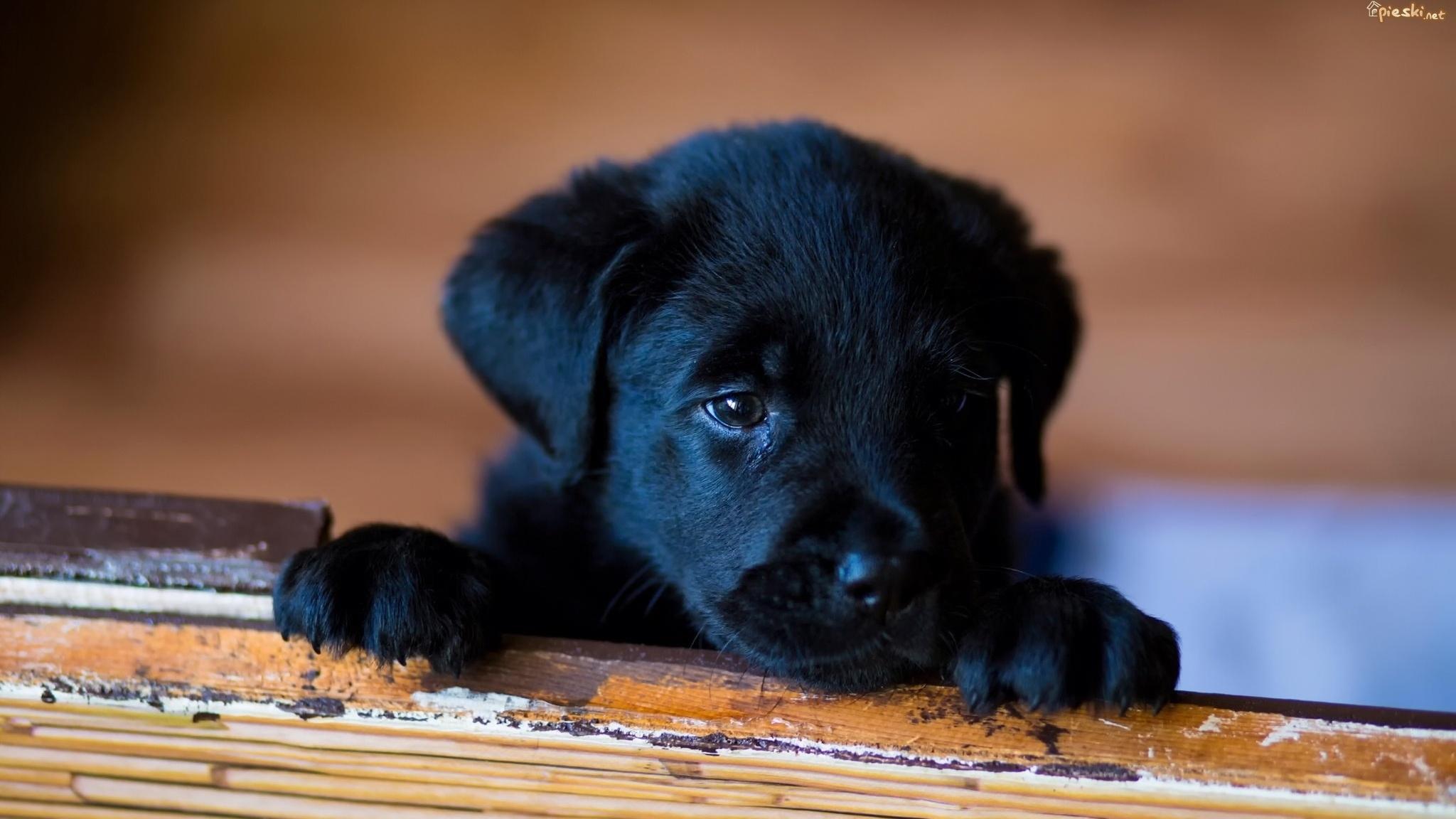 Cute Mutt Dog Black Puppy