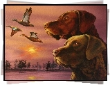 Dwa, Chesapeake Bay retrievery, kaczki