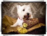 West Highland White Terrier, Poduszka
